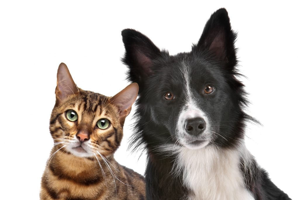 shutterstock catdog