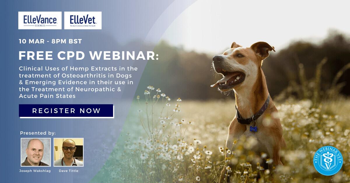 Free Ellevance Webinar